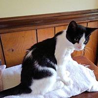 Adopt A Pet :: Cara - Petersburg, VA