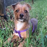 Adopt A Pet :: Snapple - Davie, FL