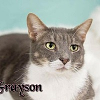 Adopt A Pet :: Grayson  Male - Knoxville, TN