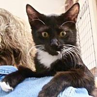 Adopt A Pet :: Dweezill - Davis, CA