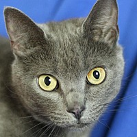 Adopt A Pet :: Graceland - Winston-Salem, NC