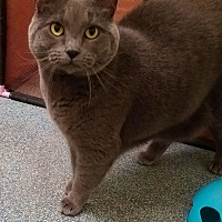 Adopt A Pet :: Shadow - Simpsonville, SC