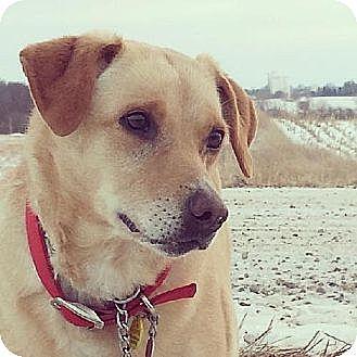 Labrador Retriever Mix Dog for adoption in Eldora, Iowa - Jenny