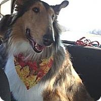 Adopt A Pet :: Angel - Minneapolis, MN