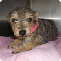 Adopt A Pet :: Clover - Phoenix, AZ