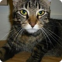 Adopt A Pet :: Chevelle (in foster care) - Milwaukee, WI
