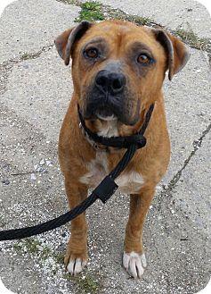 Shepherd (Unknown Type) Mix Dog for adoption in Milan, Michigan - Mercy