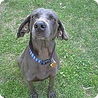 Adopt A Pet :: Spooky - St. Louis, MO
