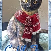 Adopt A Pet :: Paisley - East Brunswick, NJ