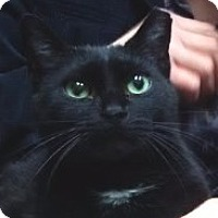 Adopt A Pet :: BLACKIE - QUEEN OF  LAPS - New York, NY