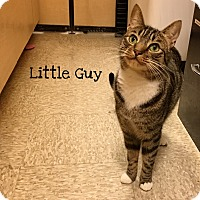 Adopt A Pet :: Little Guy - Foothill Ranch, CA