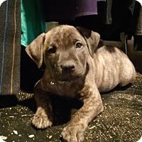 Adopt A Pet :: Kennedy - Nashville, TN