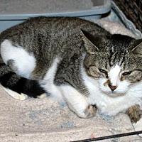 Adopt A Pet :: Daisy - Pryor, OK