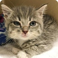 Adopt A Pet :: Faith   $20 - Lincolnton, NC
