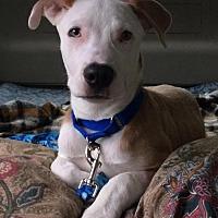 Adopt A Pet :: Justin TIme - Sarasota, FL