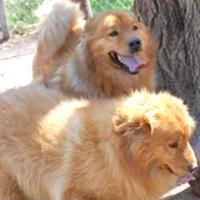 Adopt A Pet :: alice - Wichita, KS