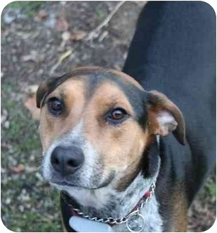 Hound (Unknown Type) Mix Dog for adoption in Long Beach, New York - Mabel