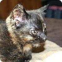 Adopt A Pet :: Minute - Kalispell, MT