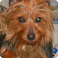 Adopt A Pet :: Kidd - Greensboro, NC