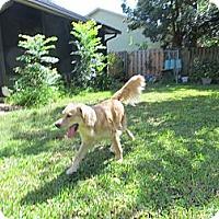 Adopt A Pet :: GABBY - Jacksonville, FL