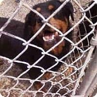 Adopt A Pet :: Faith - latrobe, PA