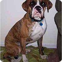 Adopt A Pet :: Buster - Brunswick, GA