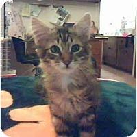 Adopt A Pet :: Mowgli - Davis, CA