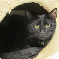 Adopt A Pet :: Paddington - Oakland, OR