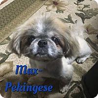Adopt A Pet :: Max - Cheney, KS