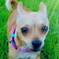 Adopt A Pet :: Chiquita Collegiate - Houston, TX