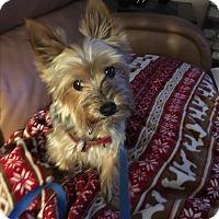 Adopt A Pet :: Adyn - Fremont, CA