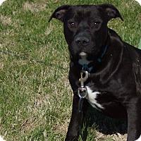 Adopt A Pet :: Spuds. **URGENT** - Columbia, TN