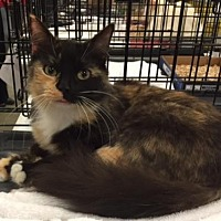 Adopt A Pet :: Heidi - Columbia, SC