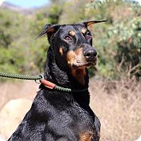 Adopt A Pet :: Brutus - Fillmore, CA
