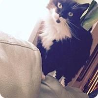 Adopt A Pet :: Bijou - Philadelphia, PA