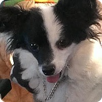 Adopt A Pet :: Keane - St Louis, MO
