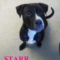 Adopt A Pet :: STAR - Franklin, NC