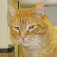 Adopt A Pet :: Reeces - Woodstock, IL