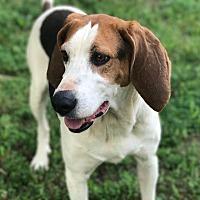 Adopt A Pet :: Banjo - Westport, CT