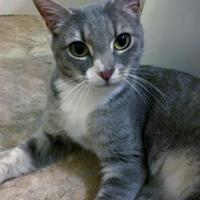 Adopt A Pet :: Skye - Ellicott City, MD