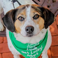 Adopt A Pet :: Cara - Washington, DC