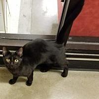 Adopt A Pet :: Tom & Jerry - Columbus, OH