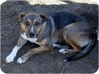 Hound (Unknown Type) Mix Dog for adoption in Glenpool, Oklahoma - Savannah