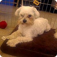 Adopt A Pet :: Lucky - Inglewood, CA