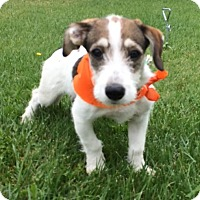 Adopt A Pet :: TRACY, adorable face! - Irvine, CA