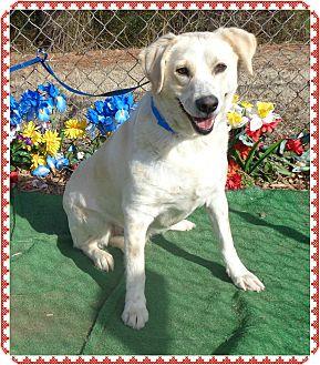 Labrador Retriever Mix Dog for adoption in Marietta, Georgia - KEETON (R)