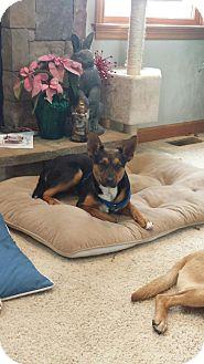 Shepherd (Unknown Type)/Terrier (Unknown Type, Medium) Mix Dog for adoption in Laingsburg, Michigan - Ren