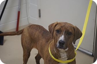Hound (Unknown Type) Mix Dog for adoption in Peace Dale, Rhode Island - Frasier