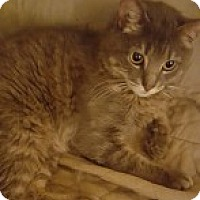 Adopt A Pet :: Rascal - McHenry, IL