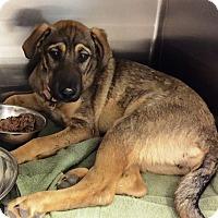Adopt A Pet :: Ella - Rancho Cucamonga, CA